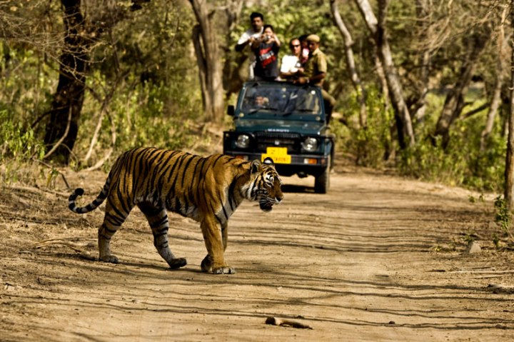 Corbett-National-Park-Jeep-Safari