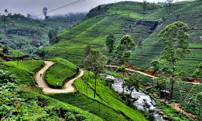 srilanka-tourism-7